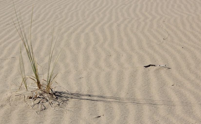 Mojave Links